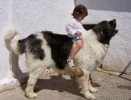 A caballo de Czeko de la Tajadera del Tío Roy