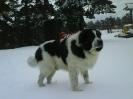 Also-Giurgyali Aladar (Kaiser) dando un paseo por la nieve